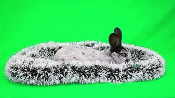 Nový rok nadýchané králík