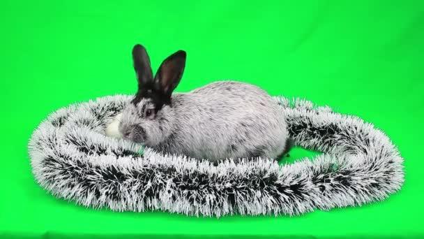 Neujahrs flauschigen Kaninchen