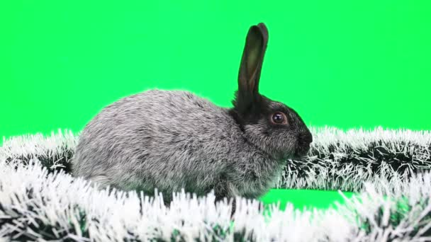 Das flauschige Kaninchen des neuen Jahres