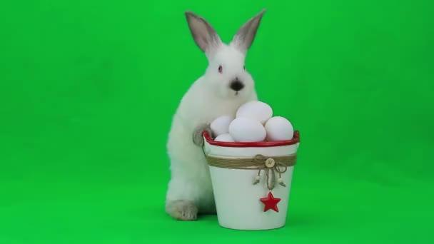 Bílý králík Velikonoce s vejci