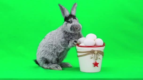 Gray easter rabbit with eggs