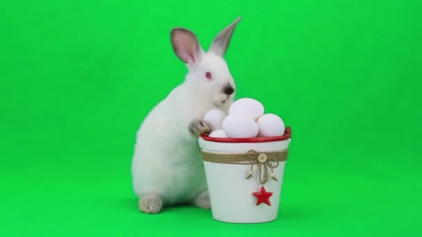 White easter rabbit with eggs