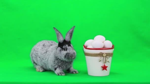 Grigio coniglio di Pasqua con le uova