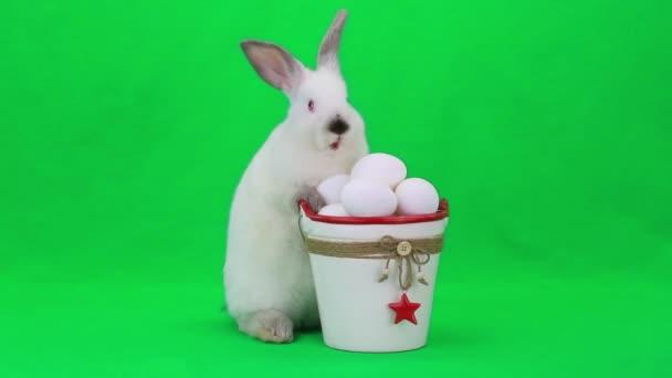 Bianco coniglio di Pasqua con le uova