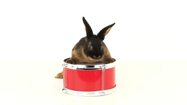 Braun auf einer Trommel Red rabbit