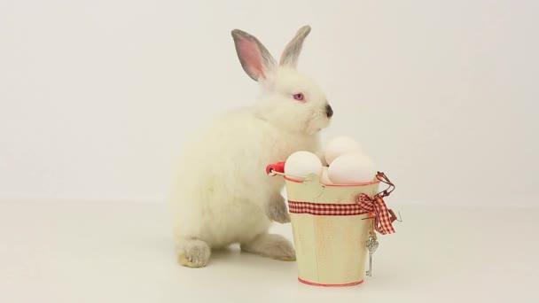 weiße flauschige Kaninchen mit Ostereiern