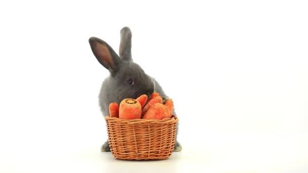 coniglio grigio che mangia le carote