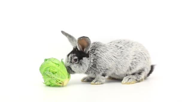 rabbit eats cabbage