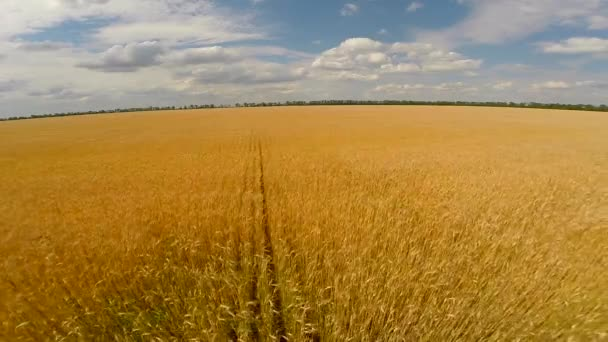 Flight over wheat field
