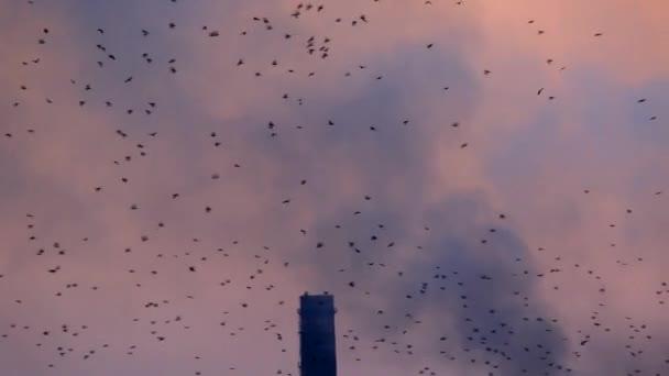 flock of birds flying near plant
