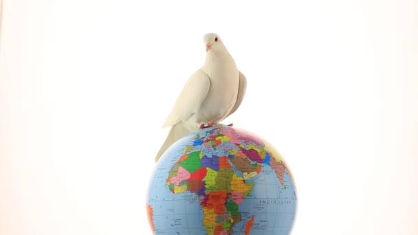 fehér galamb a világon