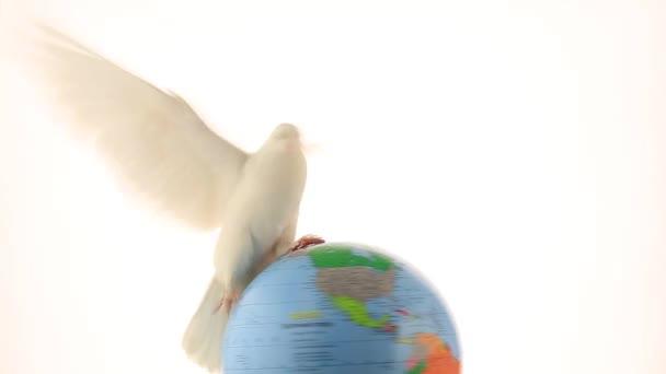 bílý holub na zeměkouli