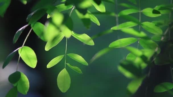 zelené listy na větvi