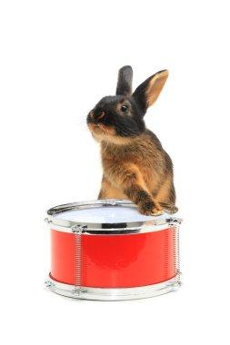 Rabbit sitting on a drum