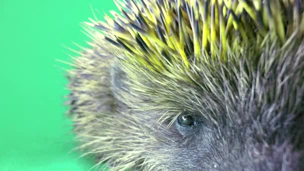 Cute prickly hedgehog