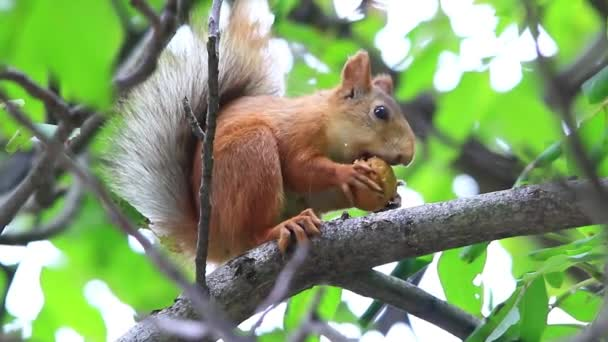 squirrel eating on branch