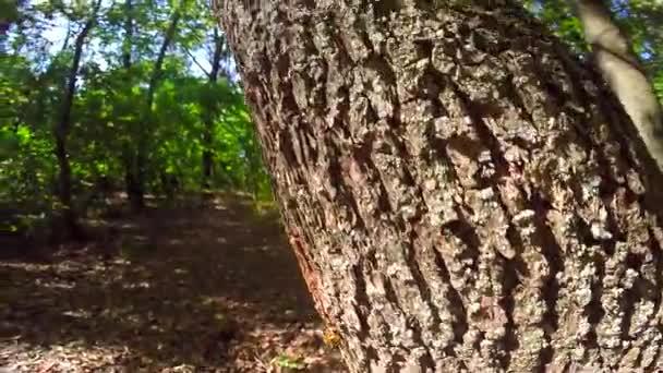 Törzs az erdő