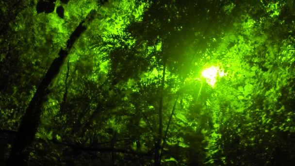 Les zelené letní
