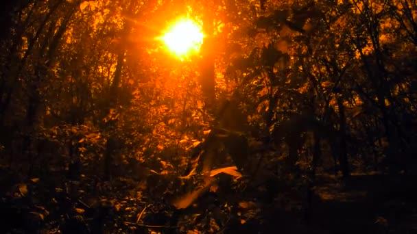 Les v jasné slunce