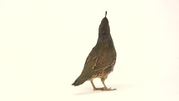 το πρώτο μεγάλο πουλί βίντεο Teen ανάγκη πορνό