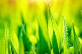 Fotografie čerstvé zelené trávě pozadí