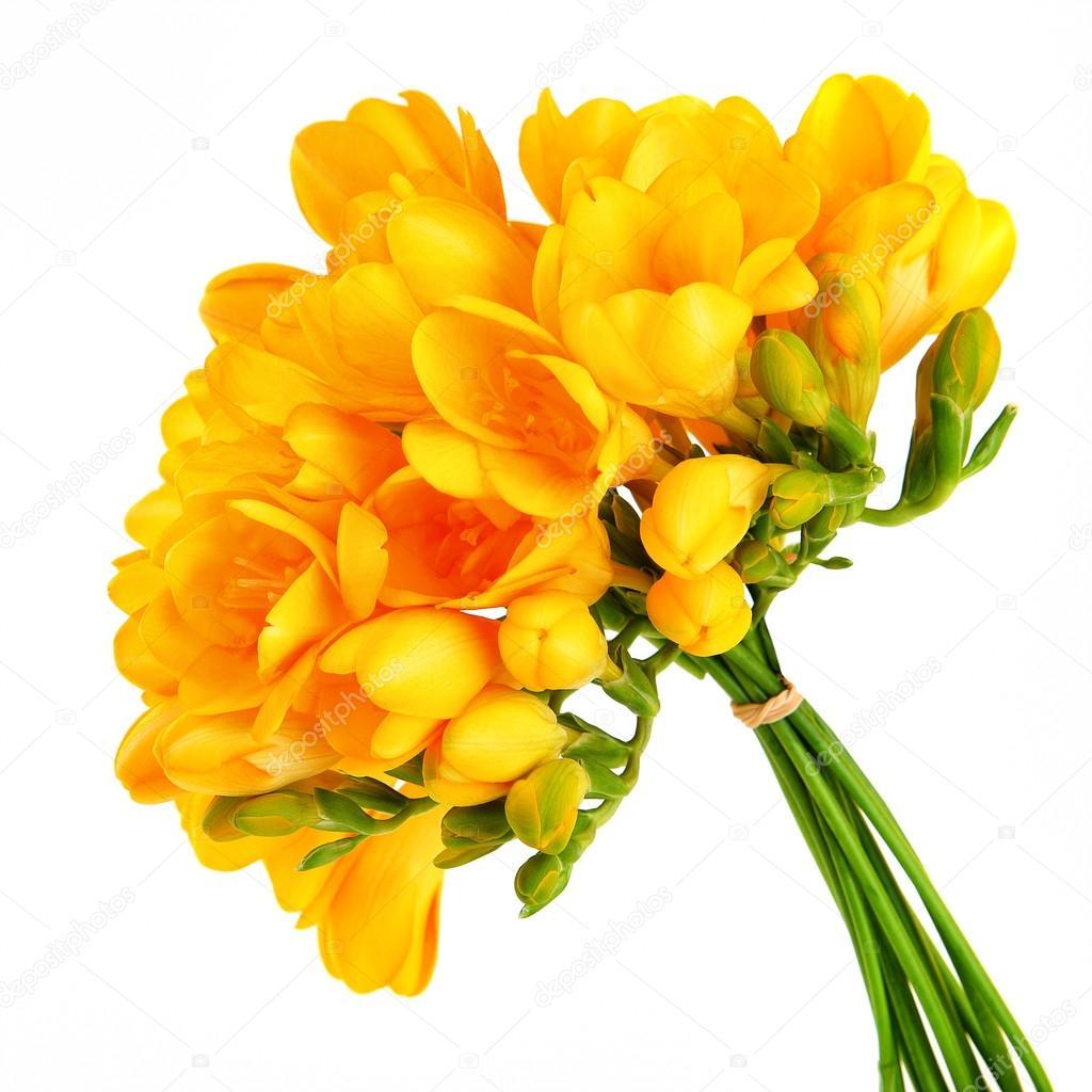 Bouquet D Une Belle Fleurs Jaune Photographie Anna Om C 115246720