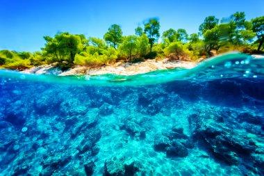 Beautiful underwater nature