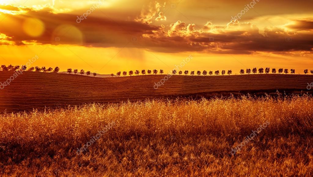 Yellow sunset over farmland