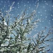 schöner Winterhintergrund