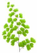 Fotografie Fresh green plant