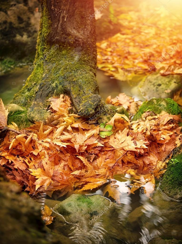 schöne herbstliche wald — Stockfoto © Anna_Om #14