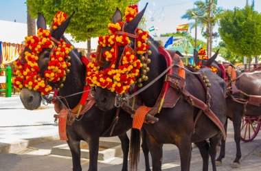 Pretty Horses with colorful ornaments participate in the famous