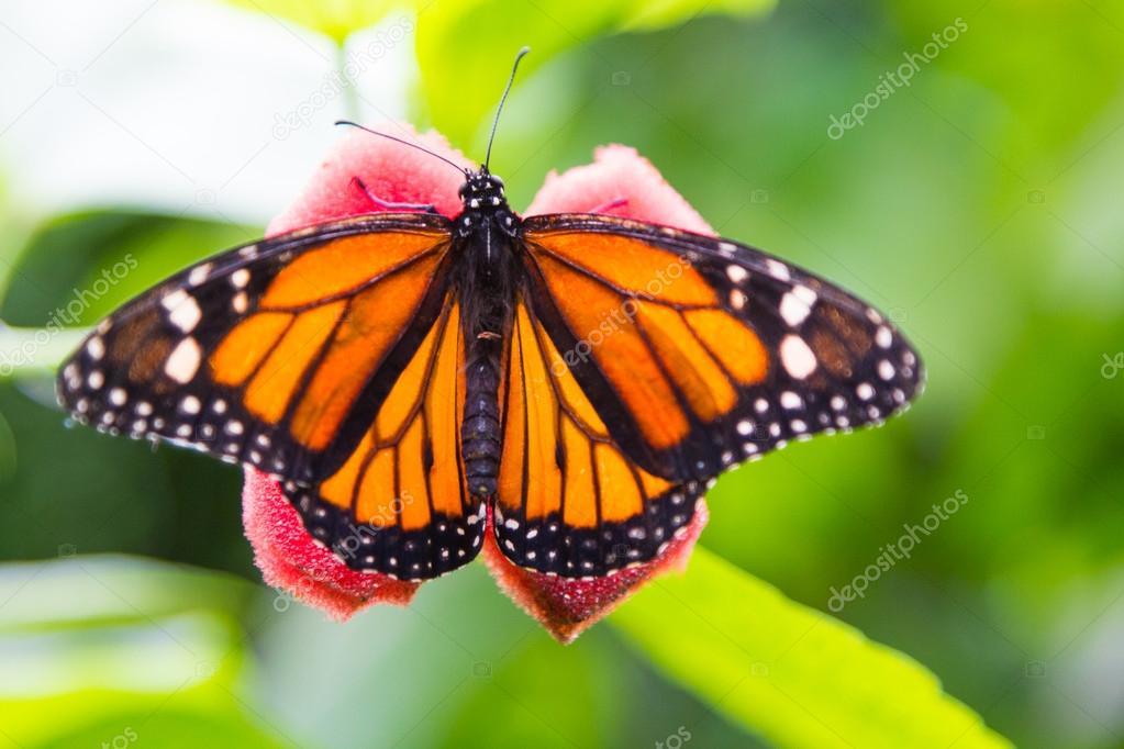 Imágenes Bonitas De Mariposas De Colores Bonita Mariposa Con Los