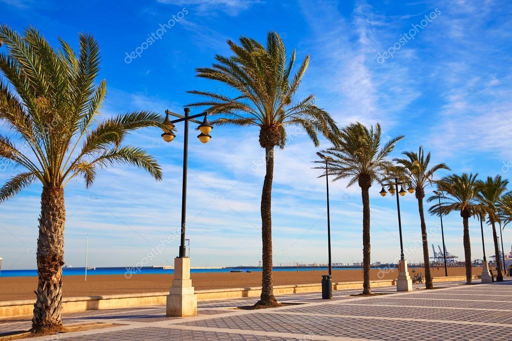 Valencia la malvarrosa strand palmen spanien stockfoto for Spiaggia malvarrosa valencia