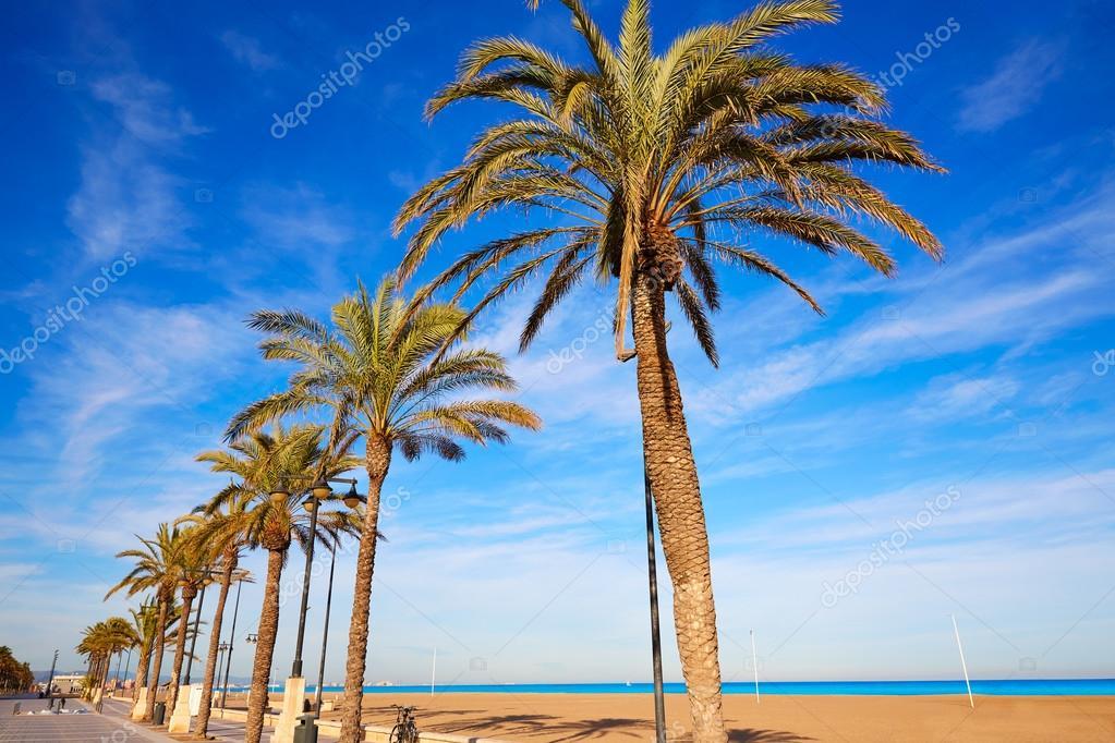 Palme della spiaggia di la malvarrosa di valencia spagna for Spiaggia malvarrosa valencia