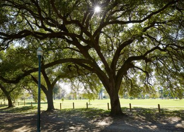Houston Hermann park Marvin Taylor trail