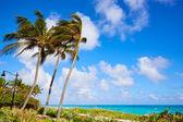 Pobřeží pláže Palm Beach, Florida nás