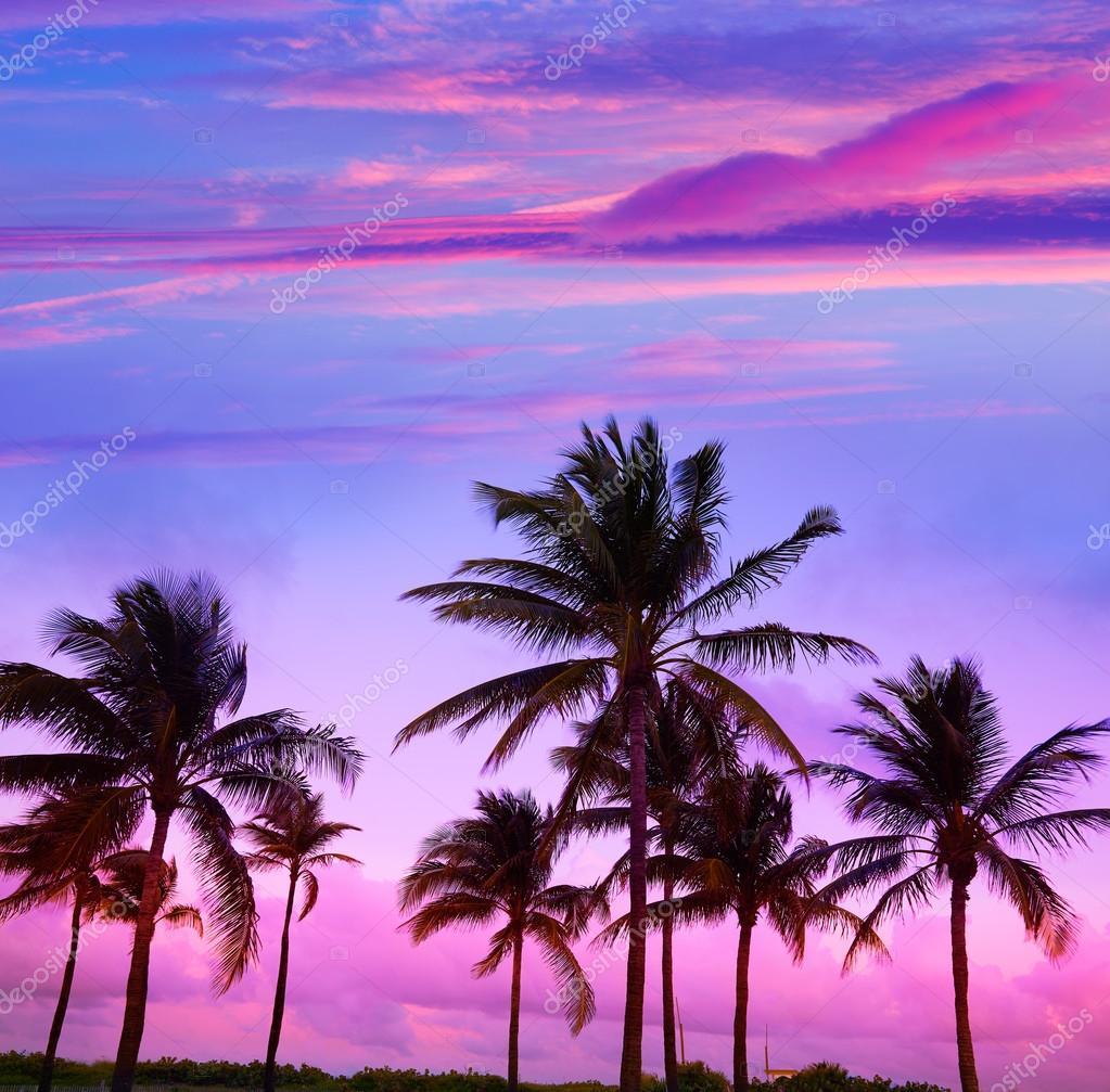 Miami Beach South Sunset Palm Trees Florida Stock Photo 114672080