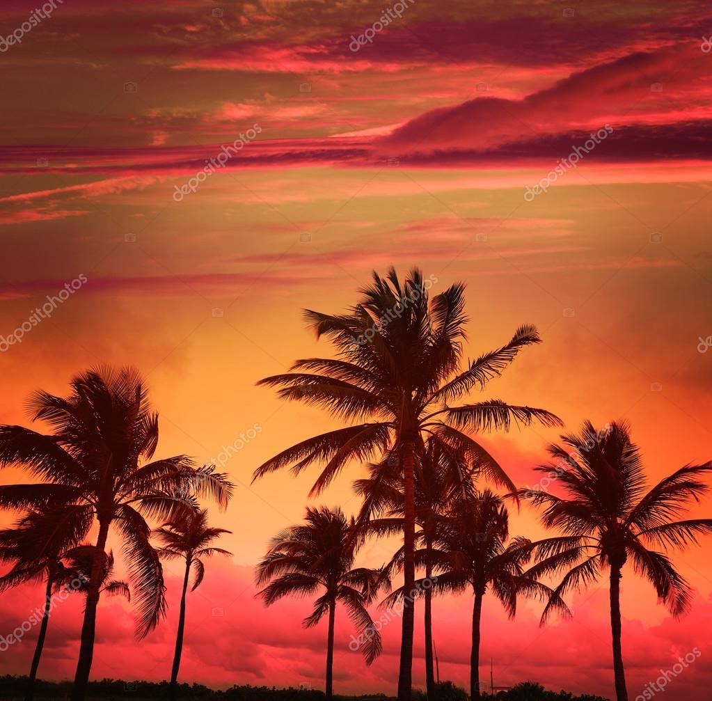 Miami Beach South Sunset Palm Trees Florida Stock Photo 114672316