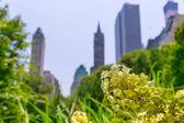 Fotografie Central Park květiny Manhattan v New Yorku
