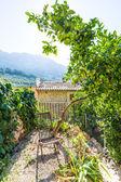 Fotografie Majorca Balearic house patio in Balearic islands
