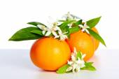 Fotografie Oranges with orange blossom flowers on white