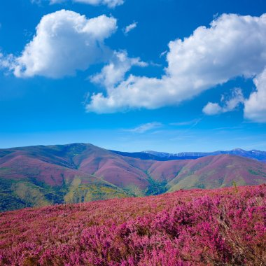 The way of Saint James in Leon pink mountains