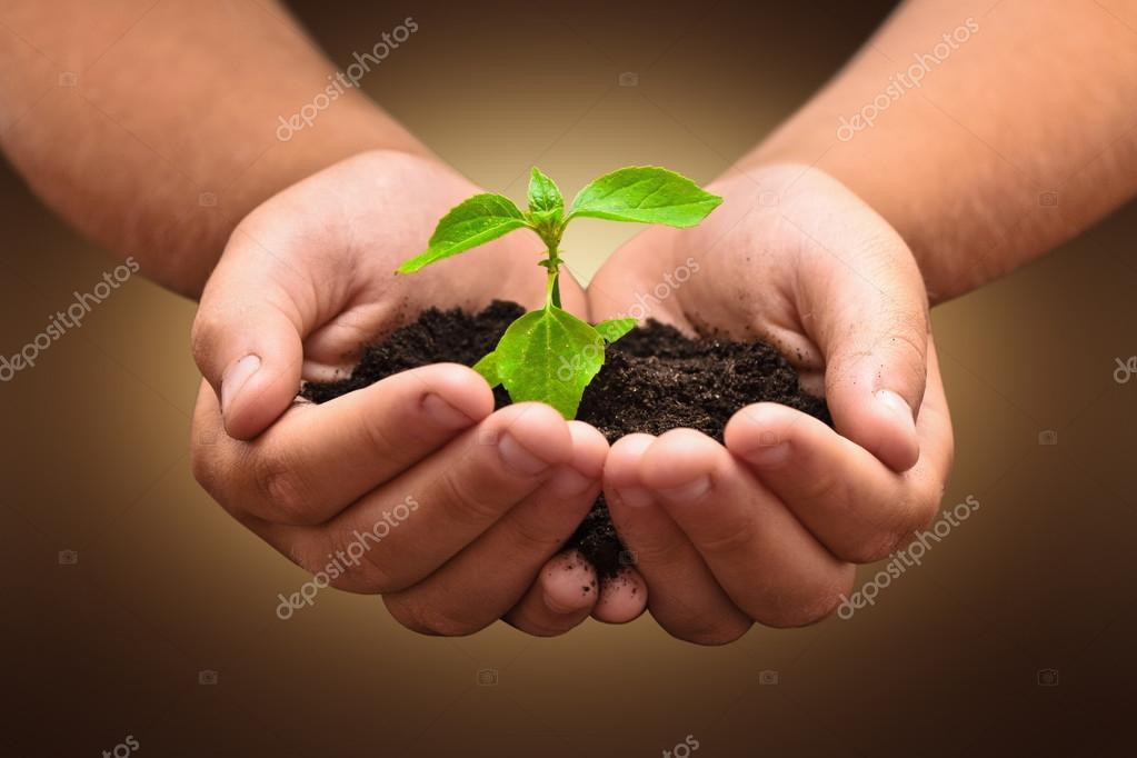 Green plant in a child hands