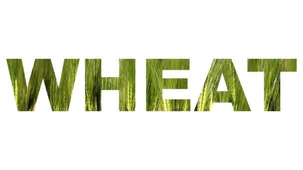 Pohyblivé pšeničné pole za slovo pšenice