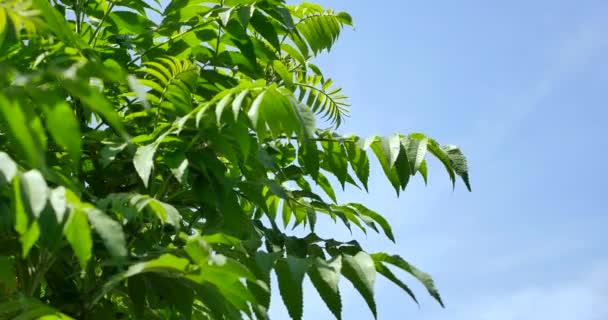 4 k strom větví a listí, mával na vítr