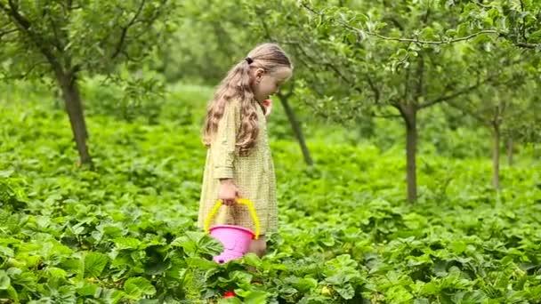 malá holčička jíst jahody