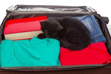 suitcase with clothes and a black cat