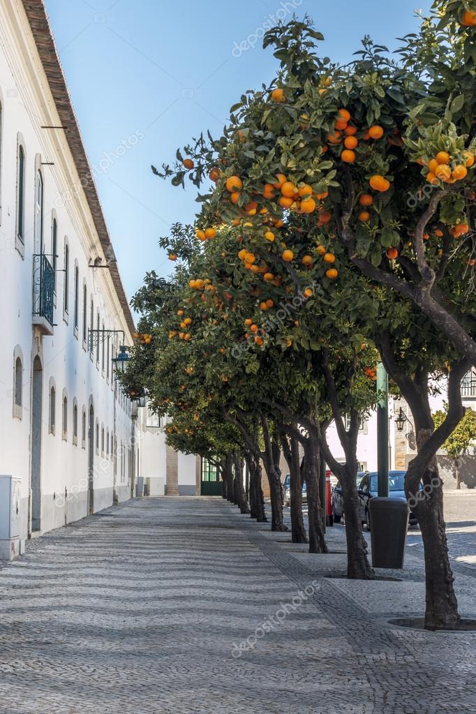 Cobblestone street with orange trees — Stock Photo © membio