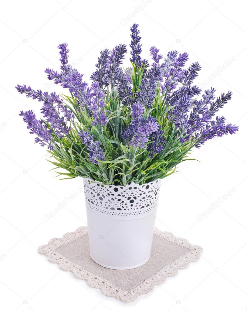 Vaso con fiori di lavanda isolata su un bianco foto for Lavanda coltivazione in vaso